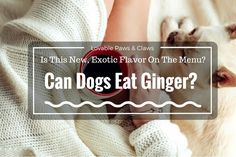 Does it seem to you that your dog's diet is pretty boring? Lots of pet owners feel this way. Day in, day out, we feed our furry friends the same thing. We know salt and sugar are dangerous for dogs, but can dogs eat ginger?