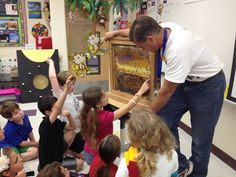 An observation hive is a safe way for children to peek into the home of a honey bee.