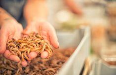 Τα έντομα έρχονται και στα πιάτα της Ευρώπης, μετά την έγκριση των σκαθαριών | My Review Types Of Waste, Save Mother Earth, Types Of Plastics, Save The Planet, Beetle, Eat, Game Changer, Wildlife, Environment