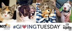 ACCT Philly Encourages Donations ToThe Pet Medical Fund (Photo: ACCT Philly)
