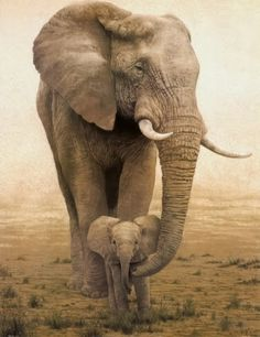 Mom And Baby Elephant