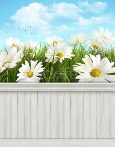 Stock photo:  Spring wall background/backdrop