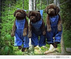 Drying puppies - Funny puppies in overalls hanging on a clothes line.