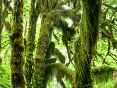 So much moss in the Hoh Rain Forest.