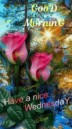 Good Morning Flowers Gif, Good Morning Wednesday, Morning Blessings, Beautiful Flowers, Blessed, Christmas Ornaments, Holiday Decor, Plants, Cute Good Morning Messages