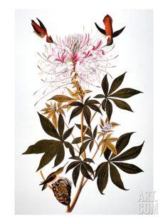 Audubon: Hummingbird Art Print by John James Audubon at Art.com
