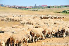 Salamanca, rutas, sendas y cañadas.