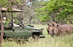 An African safari should be on every traveller's must-do list. Experience the bush in comfort, style and luxury with your family. Here's some inspiration for African safari adventures for families, or, search our Crafted Programs > River Lodge, Safari Adventure, Picnic Spot, Travel Expert, Game Reserve, Whale Watching, Safari Animals, African Safari, Day Tours