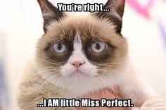 Grumpy Cat is Little Miss Perfect----haha oh Tardar Sauce!