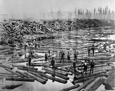 "Beginning of the log drive, Grand Rapids. Folder ""Copyprints of Historical Logging Photos from Archives of MI Dept. of Conservation. Grand Rapids Michigan, State Of Michigan, Oscoda Michigan, Old Pictures, Old Photos, Forest Pictures, Old Trees, Up Book, Historical Images"