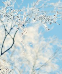 winter birch - my backyard and nature are wonderful places to be.