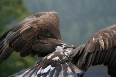Unter Falken, Adlern und Geiern Camping, Falcons, Rv, Viajes, Animales, Campsite, Campers, Tent Camping, Rv Camping
