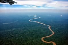 Central African Republic's Rain Forest