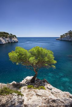 Lone Pine Tree Calanques Cassis Provence France #sun #tourismepaca #seasnowsun #sea #calanques