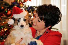 Świąteczne przygotowania czworonożną Adą Autor: betio71  #QSQ #Christmas #tree #ornament #inspiration #idea #decor #dog #hat #Santa #red