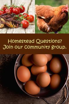 Do you have any homestead related questions? Join our community group.  https://www.facebook.com/groups/essentialhomestead/  Are you a homestead blogger?  Join us and share your knowledge.