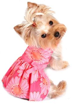 awww spring dress for my lilly