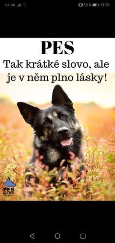 English Words, English Quotes, Pet Dogs, Pets, Belgian Malinois, Dog Quotes, Bff, Haha, Cute Animals