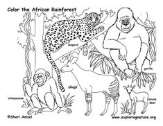 African Rainforest Animals Coloring Page Sketch