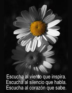 Splash Photography, Black And White Photography, Amazing Photography, Nature Photography, Urban Photography, Color Photography, White Flowers, Beautiful Flowers, Color Splash Photo