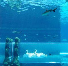 Water-slide through a Shark-tank! At Atlantis The Palm hotel in Dubai Palms Hotel, Dubai Hotel, Hotel Reservations, Beautiful Hotels, Shark Tank, Water Slides, Abu Dhabi, Atlantis, Vacation Trips