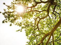 Il Sole: un alleato prezioso.... se sai come prenderlo ;)