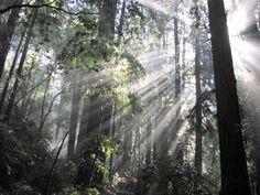 Muir Woods Marin County CA.