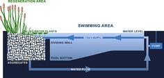piscina-ecologica3-diarioecologia by Miguel Garces, via Flickr