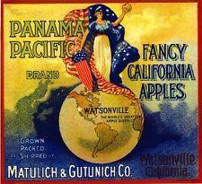 PANAMA PACIFIC Brand Fancy California Apples vintage fruit crate label - Watsonville, California