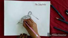 godwit art - Google Search Art Google, Google Search, Inspiration, Biblical Inspiration, Inspirational, Inhalation