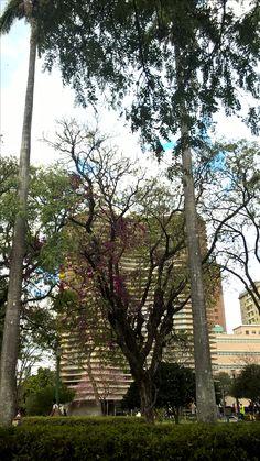 Praça da Liberdade - Edifício Niemeyer BH