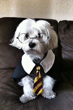 Harry Potter - Halloween Pet Parade - Southernliving. Peanut Owner: Amy Cardenas-Nguyen