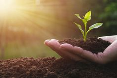 Missouri Department of Agriculture: Food Desert Agriculture Matching Grants Awarded Agriculture Photos, Food Insecurity, Food Out, Organic Matter, Gardening Tips, Sustainable Gardening, Gardening Vegetables, Desert Recipes, Growing Plants