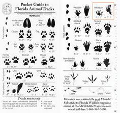 Pocket Guide to Florida Animal Tracks