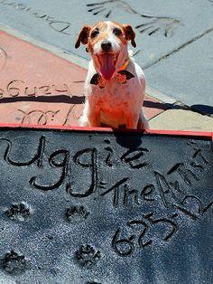It's Uggie! Star of the Oscar winner film, The Artist.