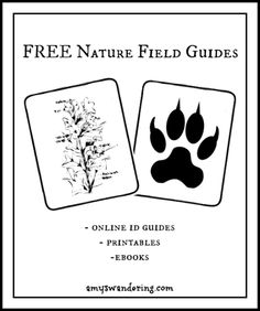 This post contains affiliate links. Field guides are essential to a good nature study. I've discovered that strewing them about leads to curiosity, which leads to learning. I tuck the books that are not currently being used into a big basket by our nature table. Guides do not have to break the bank. I picked most [...]
