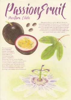 Passionfruit Technical Drawing on Behance