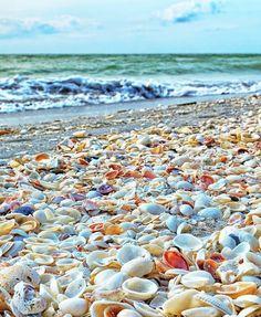 Cáscaras de Sanibel Island en la playa: