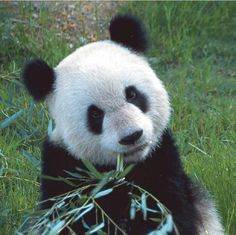 I have no relation with Po, the panda from Kung Fu Panda, the kung fuey panda. Nope. No relation at all.