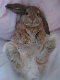 Looks like my Chala bunny