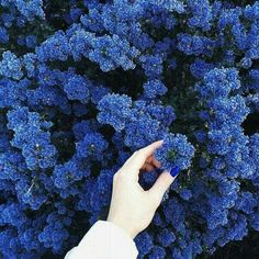 Find images and videos about blue, aesthetic and nature on We Heart It - the app to get lost in what you love. Blue Flowers, Beautiful Flowers, Exotic Flowers, Yellow Roses, Pink Roses, Beautiful Images, Image Bleu, Everything Is Blue, Aesthetic Colors