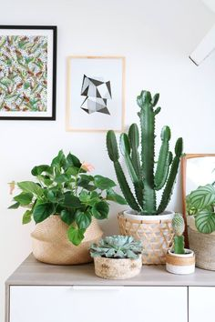 Room decoration using cactus is never ending. Starting from the real cactus, cactus displays, to the cactus made of stone. Methods, planting media, and pots used to plant cactus and important infor… Cacti And Succulents, Cactus Plants, Small Cactus, Cactus Flower, Cactus Art, Cactus Decor, Plantas Indoor, Decoration Plante, Home Decoration