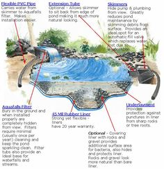 A Step-by-Step Guide to Building, Planting, Stocking, and Maintaining a Backyard Water Garden