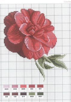 0 point de croix grille et couleurs de fils camélia fleur rouge
