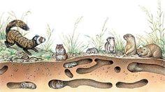Биология в лицее: Пути воздействия организмов на среду обитания