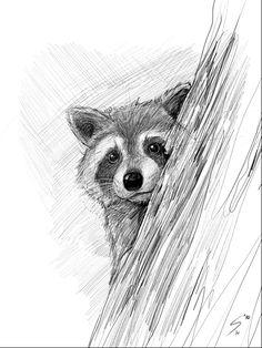 Feb 2020 - Raccoon Portrait by Temiree on DeviantArt Easy Pencil Drawings, Realistic Animal Drawings, Pencil Drawings Of Animals, Art Drawings Sketches Simple, Cool Drawings, Animal Sketches Easy, Drawing Animals, Tattoo Drawings, Raccoon Drawing