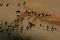 Esta é uma foto tirada diretamente acima destes camelos no deserto durante o por do sol. É considerada uma das melhores fotos do ano pela National Geographic. Dê zoom, os camelos são as linhas brancas pequenas na imagem. O preto que você vê são apenas as sombras !!
