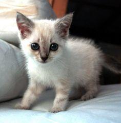 Kittenowlbestfriendsfukumarimohukuloucoffeejapan Cute - Owlet kitten meet coffee shop become best friends