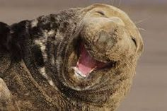 Image result for animals laughing