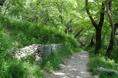 Acheron Springs - The Footpath Country Roads, World, The World, Peace